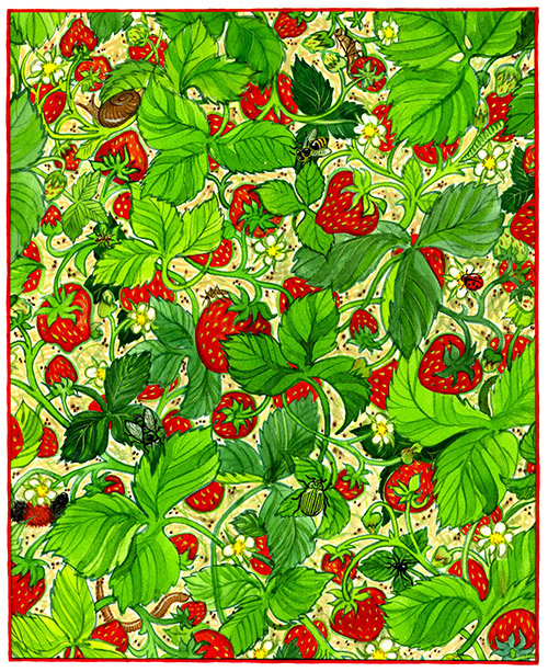 Berry Buggy Illustration